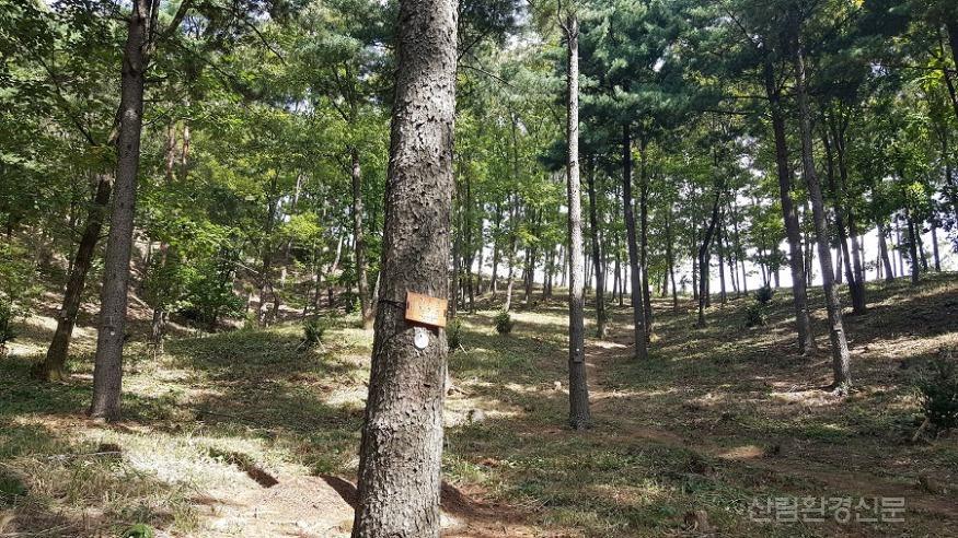 (사진1) 국립하늘숲추모원 전경.jpg