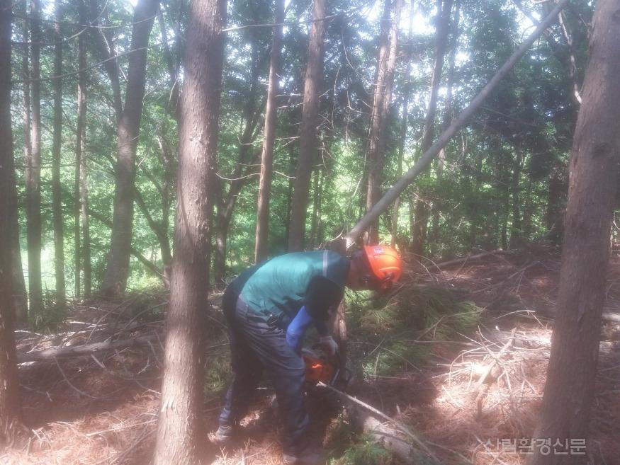 숲가꾸기패트롤 활동모습(8.12).jpg