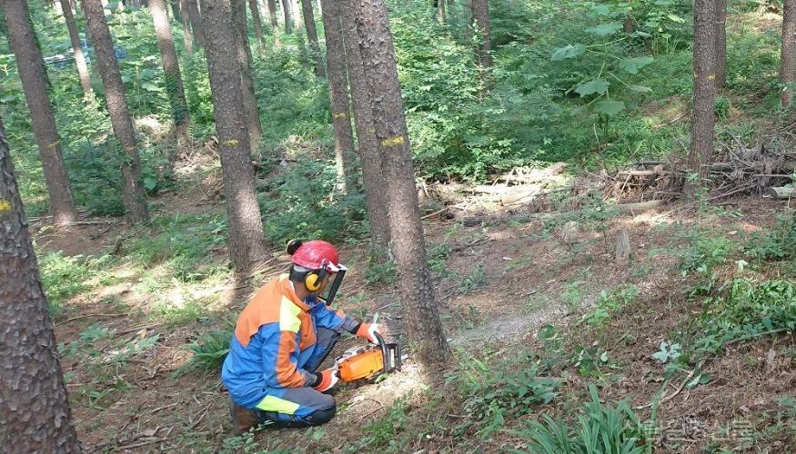 간벌작업 하는 산림작업자.jpg