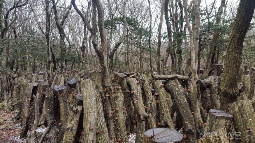 1월브리핑2-표고버섯자목.jpg